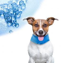 Frissítő kutya gallér