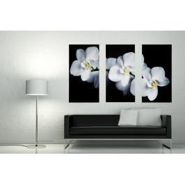 3-részes kép ORCHIDEA 30x60 cm - fehér/fekete