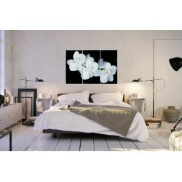 Kép ORCHIDEA 60x30 - fehér