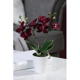 Virág ORCHID - bordó